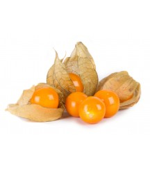GOLDIE GROUND CHERRY