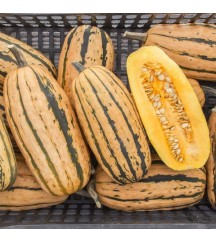 HONEY BOAT WINTER SQUASH