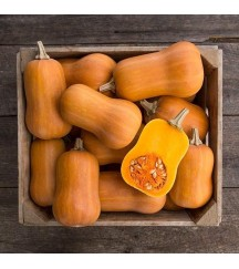 HONEYNUT BUTTERNUT SQUASH